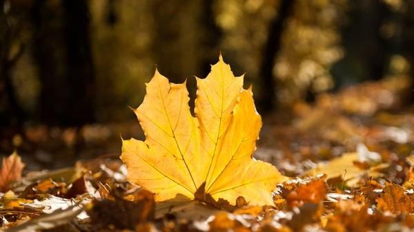 До 20 градусов тепла ожидается в последние выходные октября в регионе