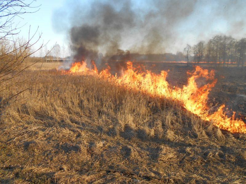 Сухая растительность горела в Лиде