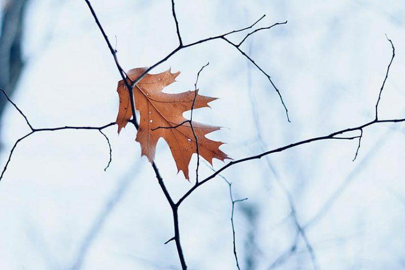 Резкое похолодание ожидается в предстоящие выходные дни в регионе