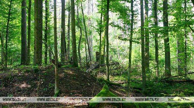 В Лидском районе введен запрет на посещение лесов.
