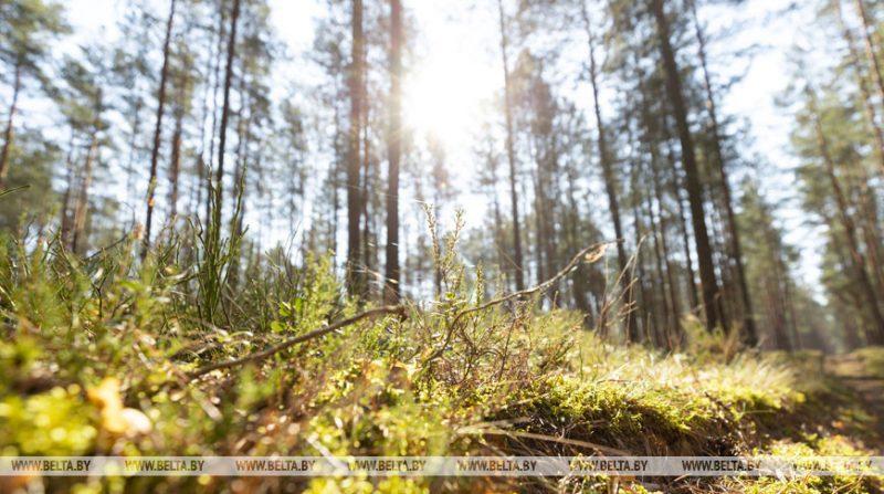 Пожароопасная ситуация в лесах сохраняется