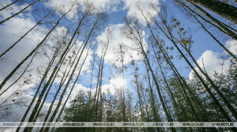 Запреты и ограничения на посещение лесов действуют в 36 районах Беларуси