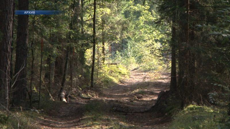 В Лидском районе снова можно посещать леса