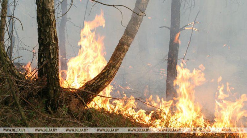 Ограничения на посещение лесов действуют в Лидском районе