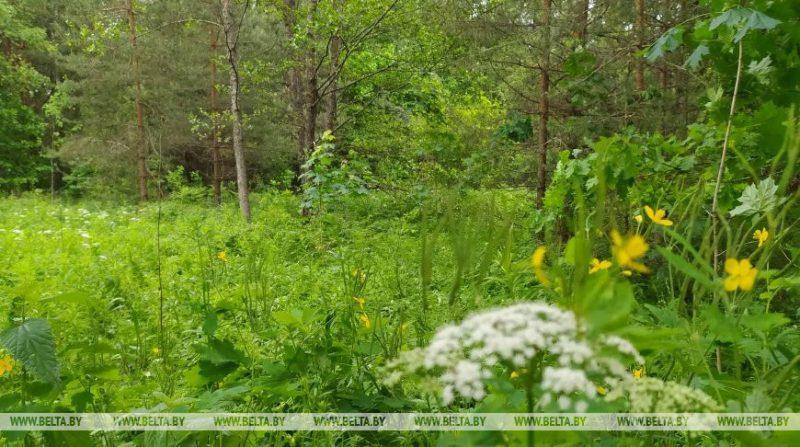 Запреты и ограничения на посещение лесов действуют в 24 районах Беларуси
