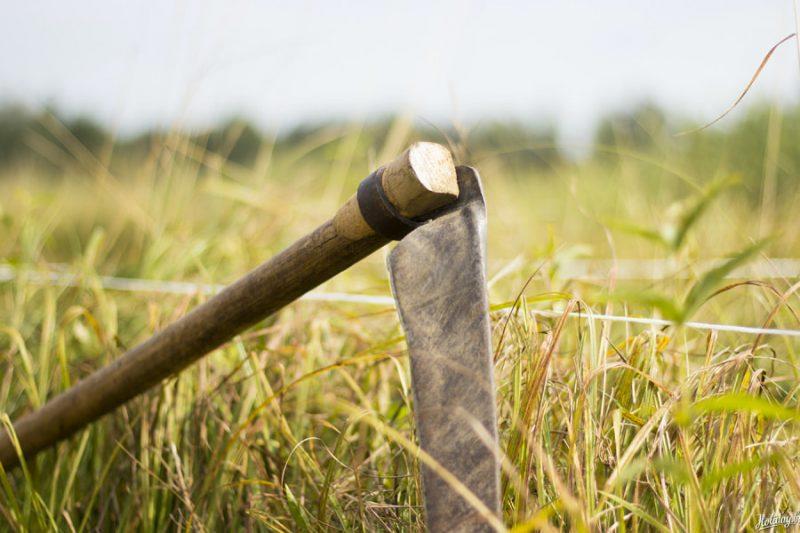 Районный праздник косьбы «Звініць каса – жыве вёска» состоится 17 июля на Лидчине