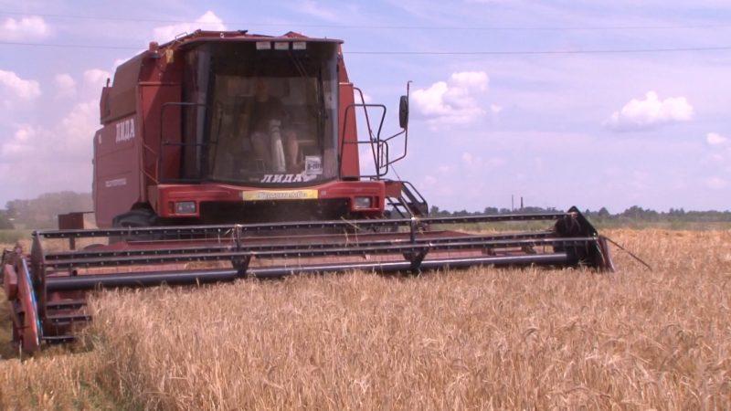 Лидские аграрии убрали 20 % площадей, отведенных под зерновые и зернобобовые культуры