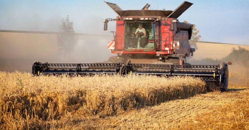 Лидские аграрии убрали 8 % площадей, отведенных под зерновые и зернобобовые культуры