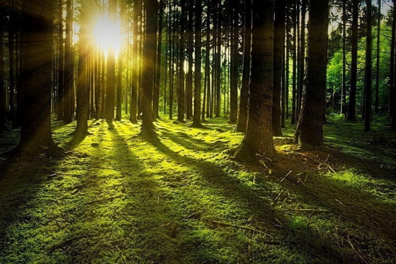 Лидские спасатели напоминают правила поведения в лесу