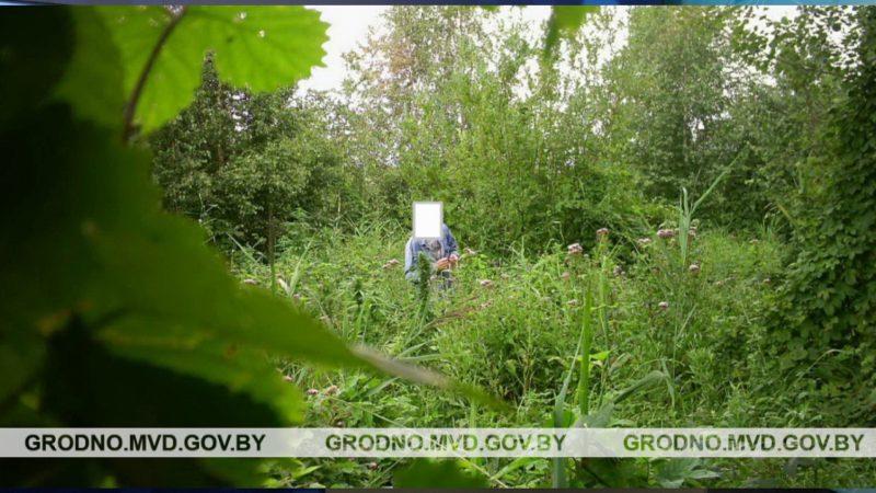 Задержан 34-летний лидчанин, выращивавший коноплю