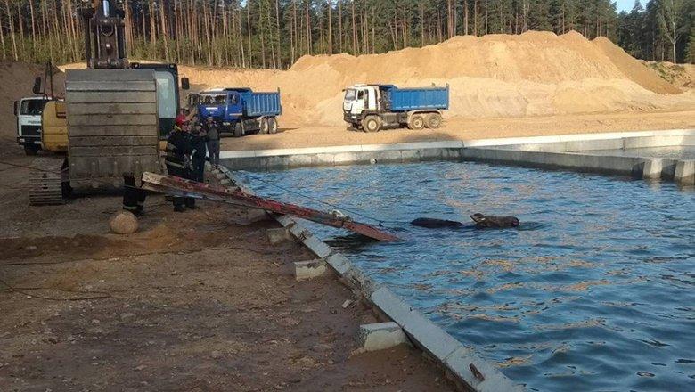 В Гродненском районе спасатели помогли лосю выбраться из резервуара с водой