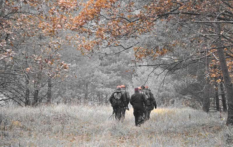 С 1 октября 2020 г. открывается загонная охота на копытных охотничьих животных