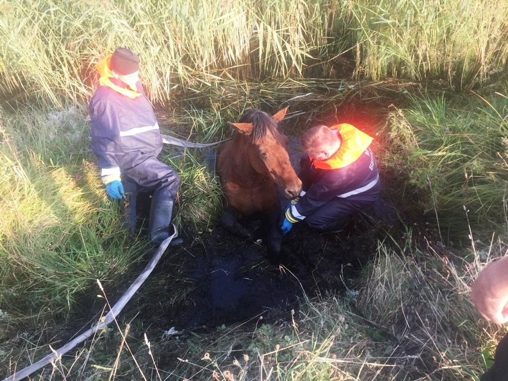 Спасатели в одной из деревень Лидского района помогли спасти лошадь
