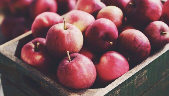 Яблочный фестиваль не состоится