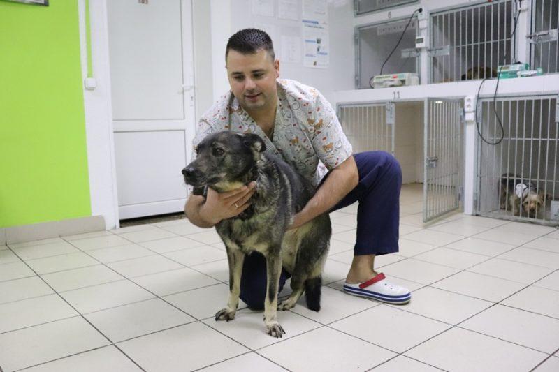 Ветеринарный врач из Лиды Павел Жульпа провел уже вторую операцию по протезированию конечности животного
