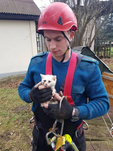 В Лиде спасатели оказали помощь котенку