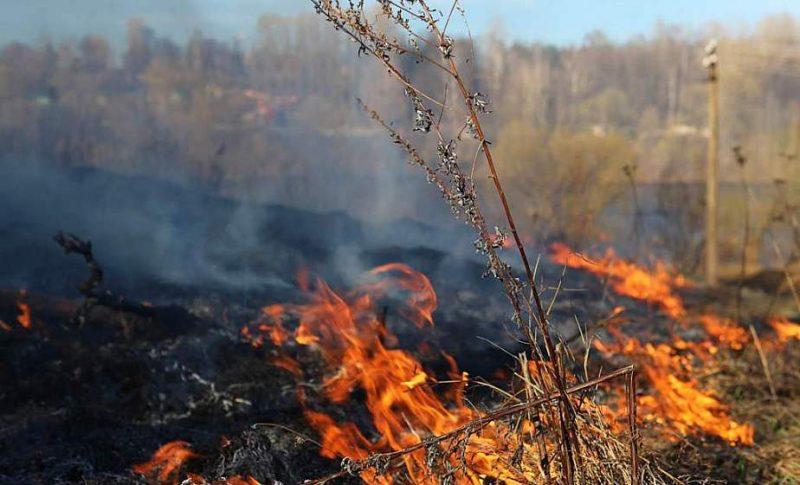 В Гродненской области начали фиксировать загорание сухой растительности