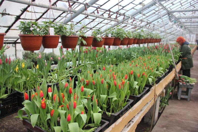 В Лиде в преддверии 8 Марта стартует торговля живыми цветами и ремесленными изделиями