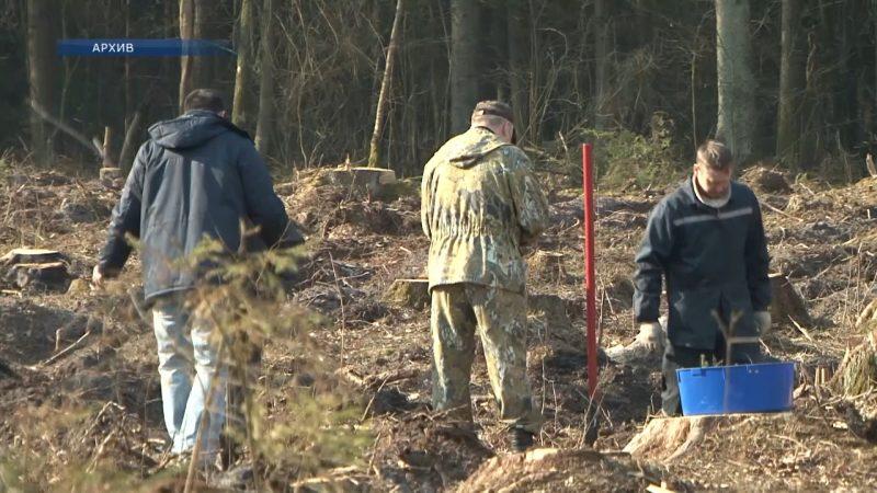 Завтра в Беларуси стартует добровольная республиканская акция «Неделя леса»