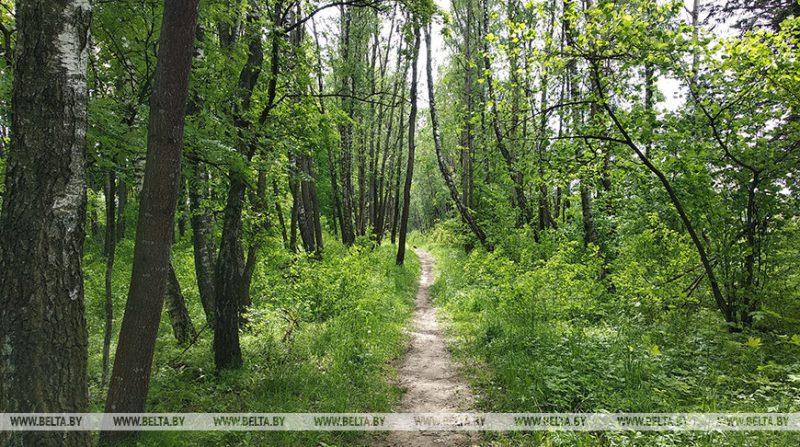 В Лидском районе с 17 июня введено ограничение на посещение лесов