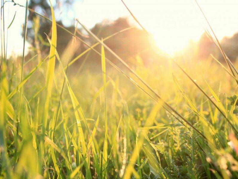 По-настоящему летняя погода установится в предстоящие выходные в нашем регионе.