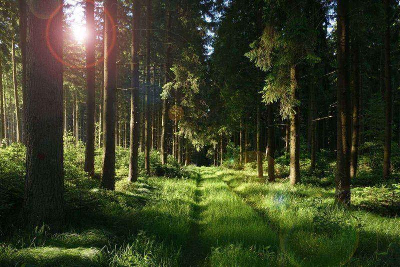 Лидские леса снова открыты для посещения