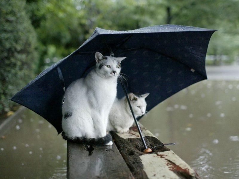 Кратковременные дожди ожидаются в Лиде на этой неделе
