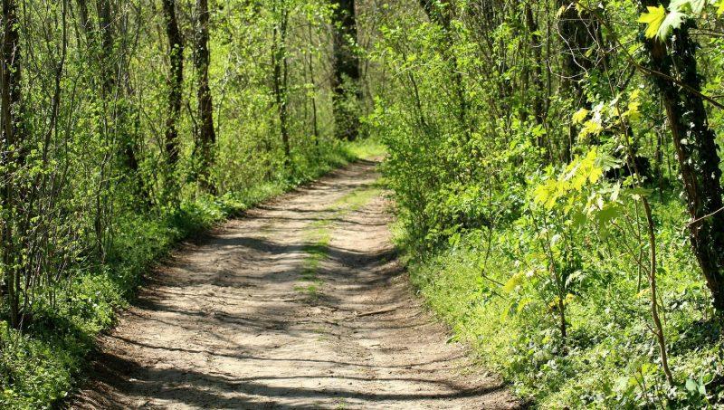 В Лидском районе снова введены ограничения на посещение лесов