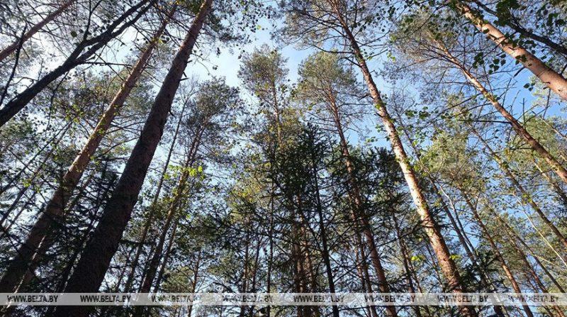 На Лидчине введены ограничения на посещение лесов