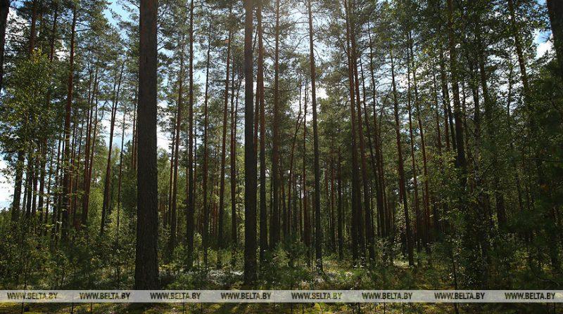 На Лидчине отменены ограничения на посещение лесов.
