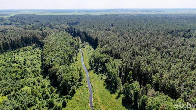 В Лидском районе накануне ввели ограничения на посещение лесов