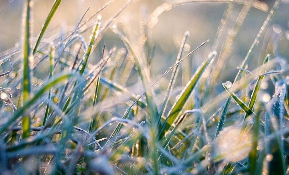 Ночные заморозки ожидаются в предстоящие выходные в регионе
