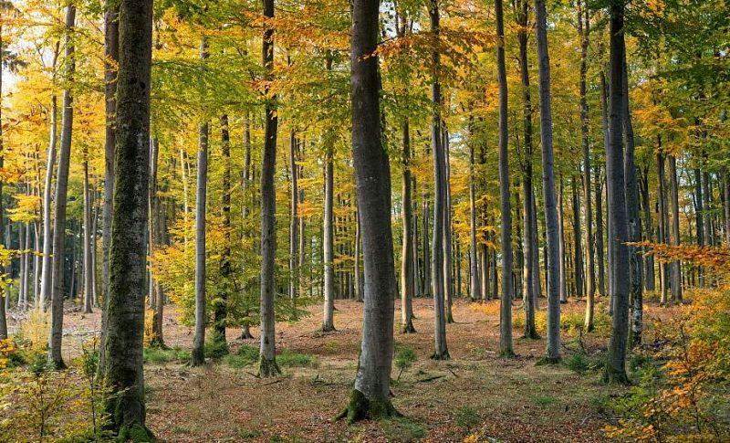 Акция «Чистый лес» пройдет в Беларуси 9 октября