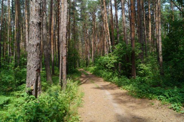 Ограничения на посещение лесов введены в Лидском районе