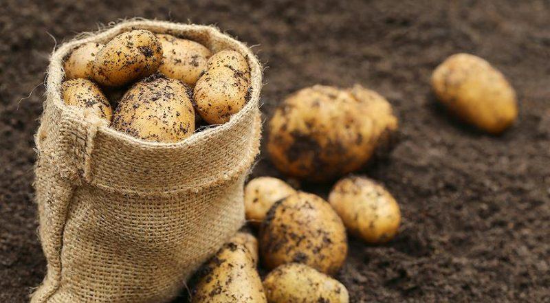 В Лидском районе во время уборки картофеля произошла драка